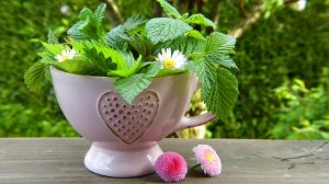 Are Green Tea Supplements Good for Health?